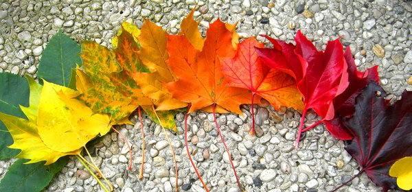 Jesienna promocja!!!